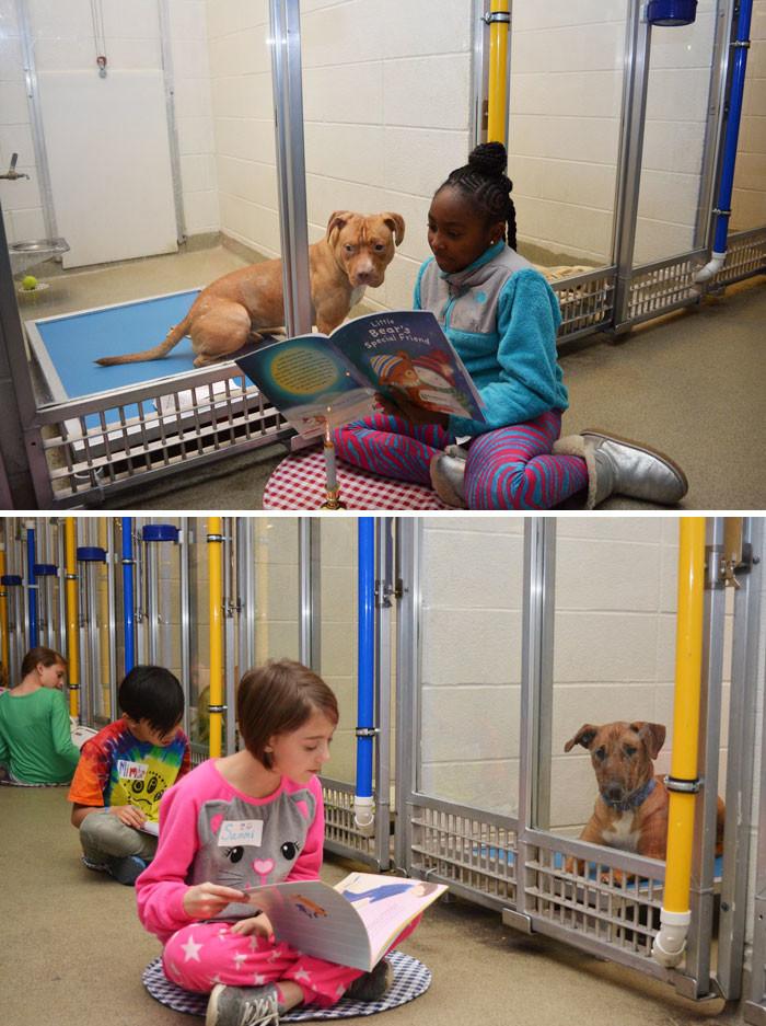 Школьники приходят в собачий приют читать собакам книжки, чтобы те привыкали к домашней атмосфере животные, спасение, счастливый конец