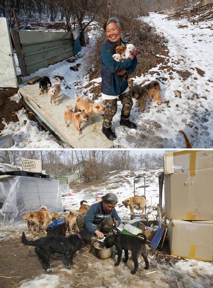 Эта кореянка воспитывает 200 собак, которых она спасла от отправки в рестораны животные, спасение, счастливый конец