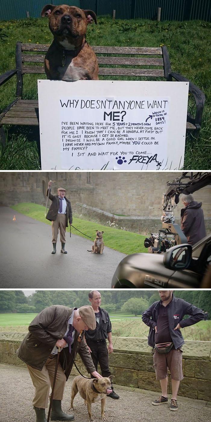 """""""Самый одинокий пес в мире"""", живший в приюте, стал звездой """"Трансформеров-5"""", сыграв в паре с самим Энтони Хопкинсом! животные, спасение, счастливый конец"""