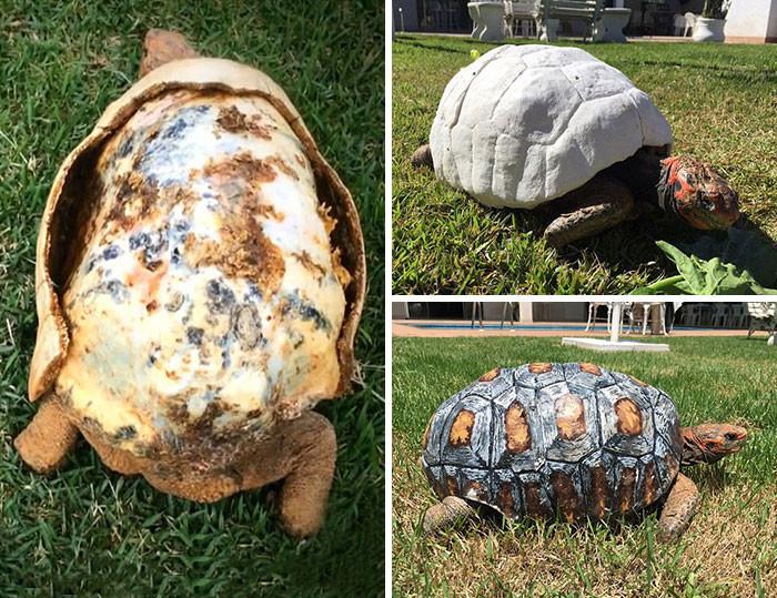 Раненая черепаха получила первый в мире 3D-панцирь животные, спасение, счастливый конец