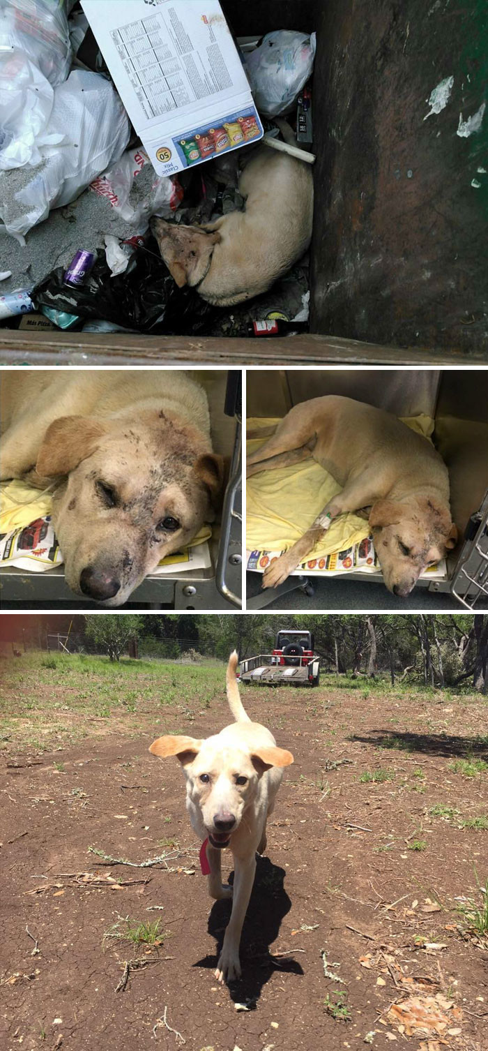 Выброшенный в мусорку пес мучился из-за сердечного приступа. К счастью, добросердечный  прохожий заметил это и спас ему жизнь животные, спасение, счастливый конец