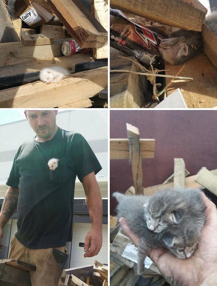 Мужчина, услышав отчаянное мяуканье котенка, мужчинв семь часов выкапывал животное и животные, спасение, счастливый конец