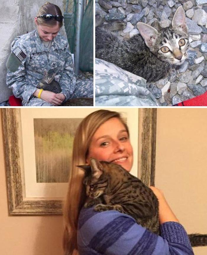 Военнослужащая отказалась оставить больного котенка в Афганистане. Она не испугалась того, что ей пришлось ждать несколько месяцев и заплатить $2000, чтобы перевезти кошку в Штаты  животные, спасение, счастливый конец