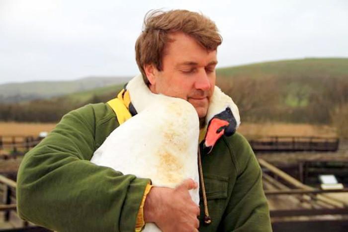 Лебедь обнимает своего спасителя, обвив его шеей животные, спасение, счастливый конец