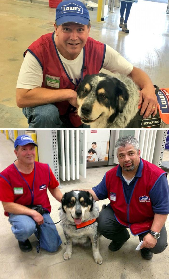 Мужчина не мог найти работу из-за собаки-поводыря. Но один из супермаркетов решился принять на работу обоих животные, спасение, счастливый конец