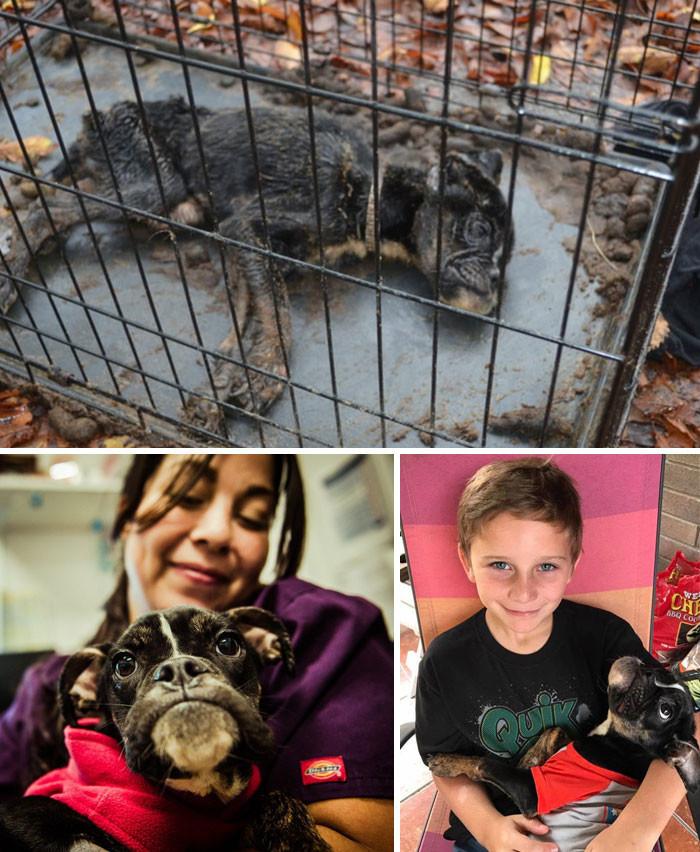 Умирающая собака была заперта в клетке. Но любовь вернула ее к жизни животные, спасение, счастливый конец