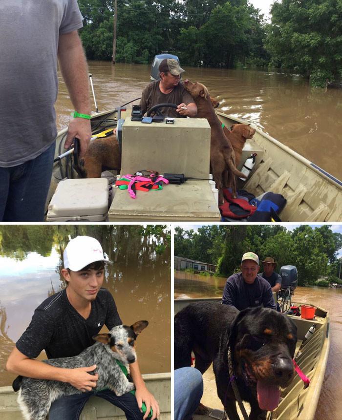 Отец и сын спасли 30 собак, брошенных хозяевами во время наводнения в округе Бразория, штат Техас животные, спасение, счастливый конец