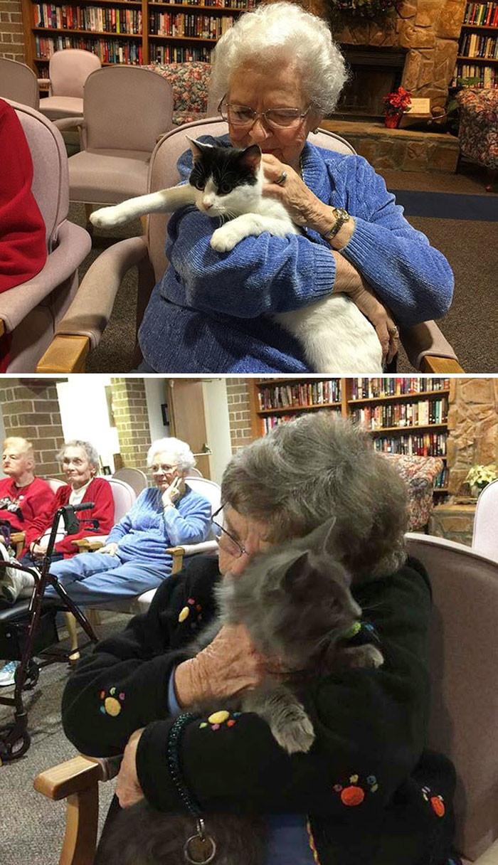 Кошачий приют привозит пожилых кошек к жильцам приюта для престарелых, чтобы животные и люди могли пообщаться друг с другом животные, спасение, счастливый конец