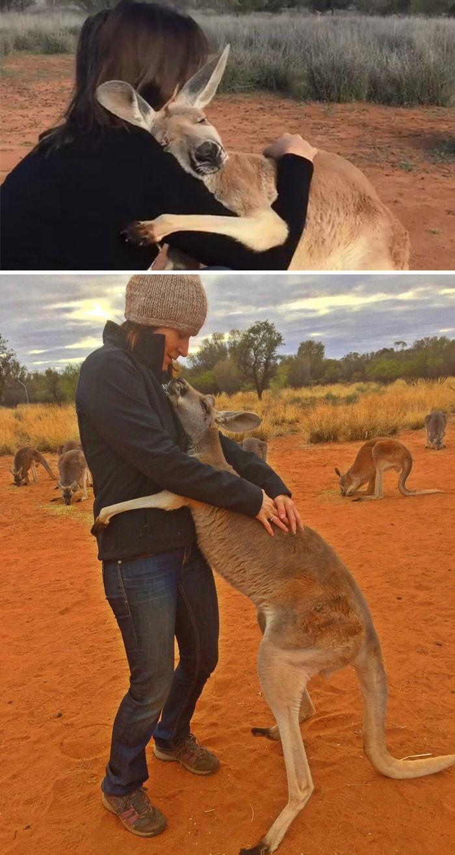 Спасенный кенгуру каждый день обнимает своих спасителей, давая им понять, как он им благодарен животные, спасение, счастливый конец