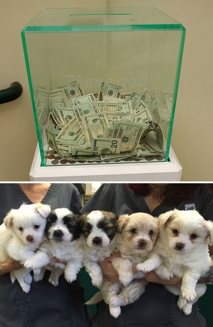 В ящик для пожертвований, которые собирает приют для животных, анонимный доброжелатель положил 8 тысяч долларов животные, спасение, счастливый конец
