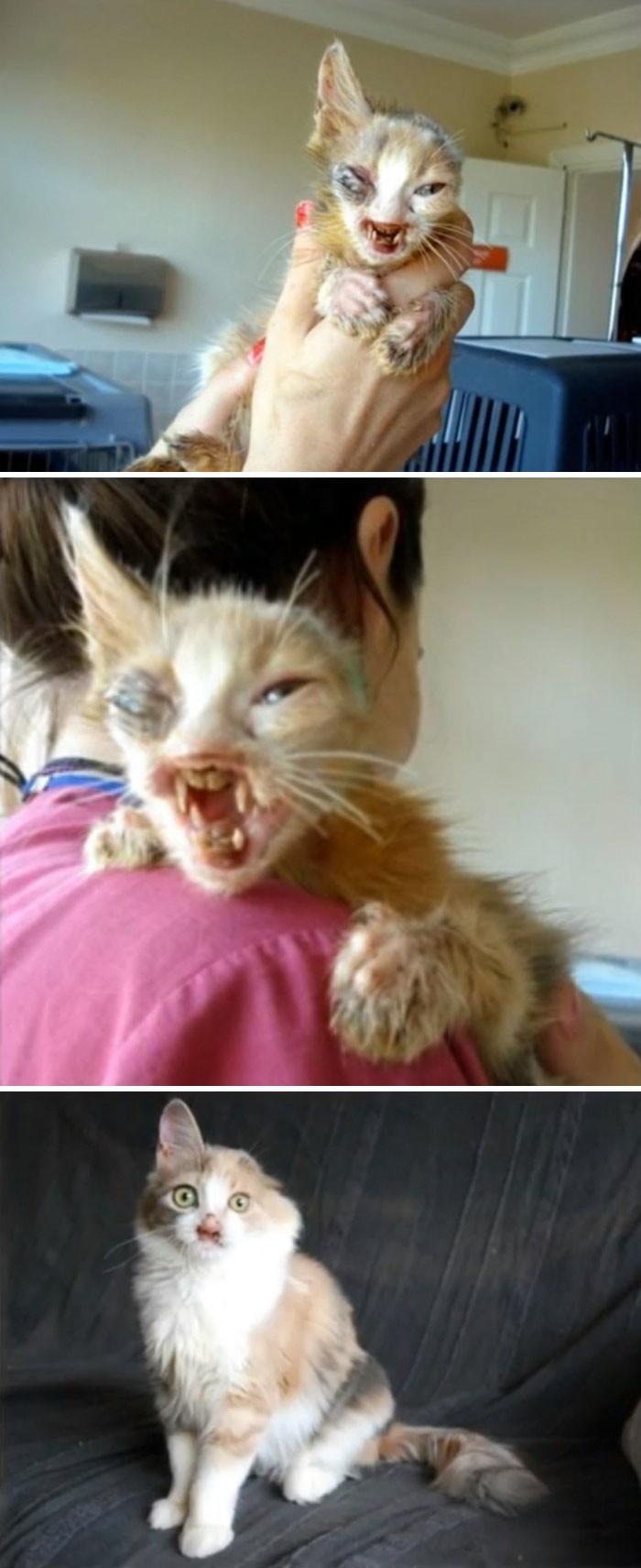 Взрослые боялись даже приблизиться к этой ужасного вида кошке. Но семилетняя девочка спасла ее животные, спасение, счастливый конец