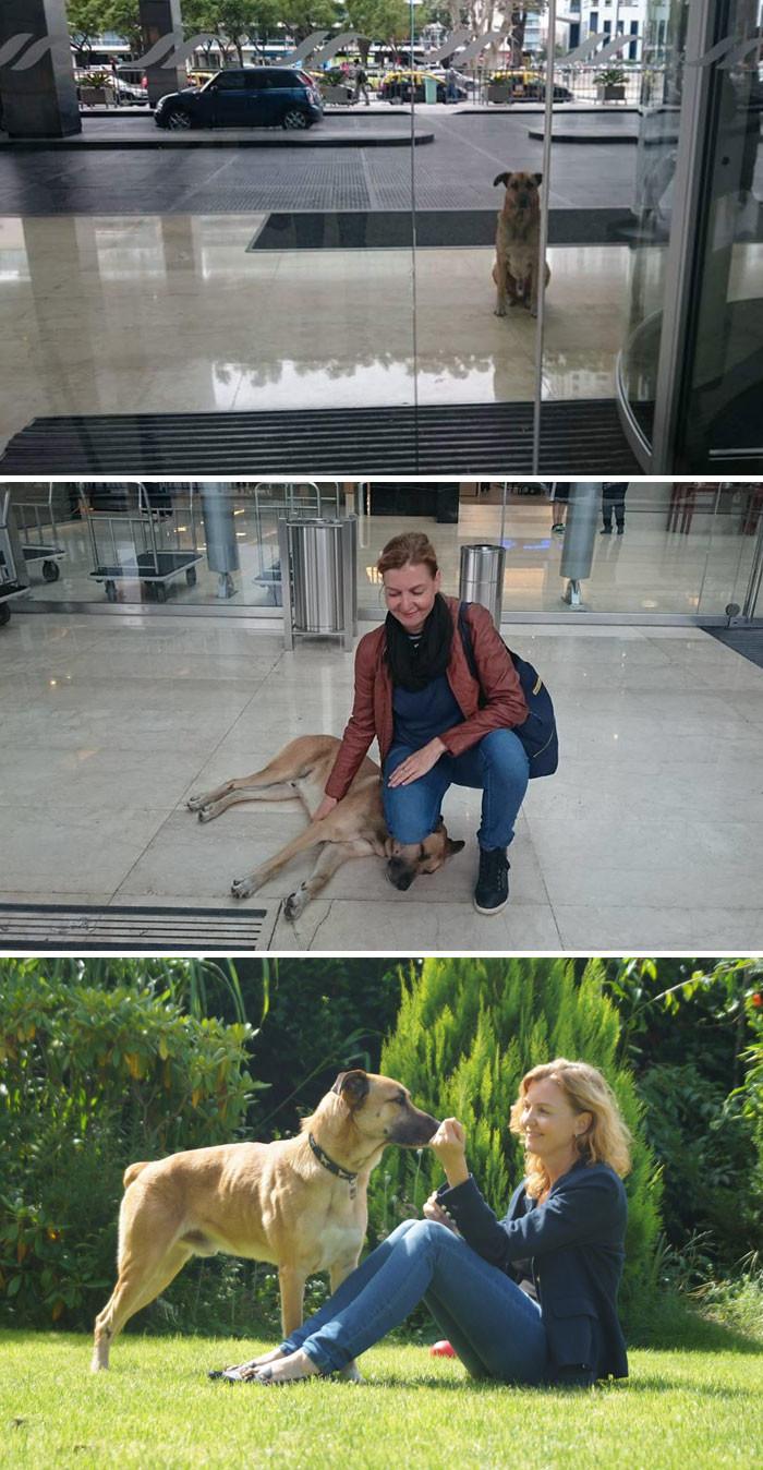 Стюардесса взяла к себе в дом собаку, терпеливо ждавшую ее у дверей отеля животные, спасение, счастливый конец