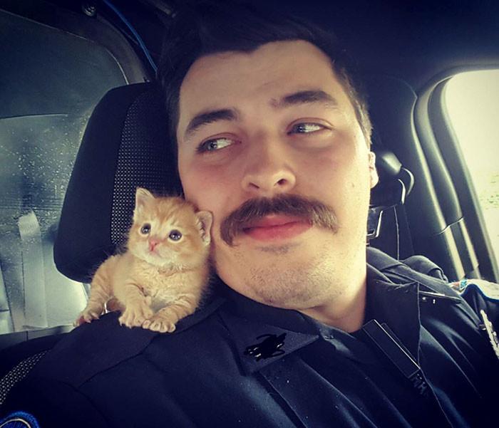 Полицейский спас котенка, выброшенного под дождь. Теперь они вместе охотятся на преступников животные, спасение, счастливый конец