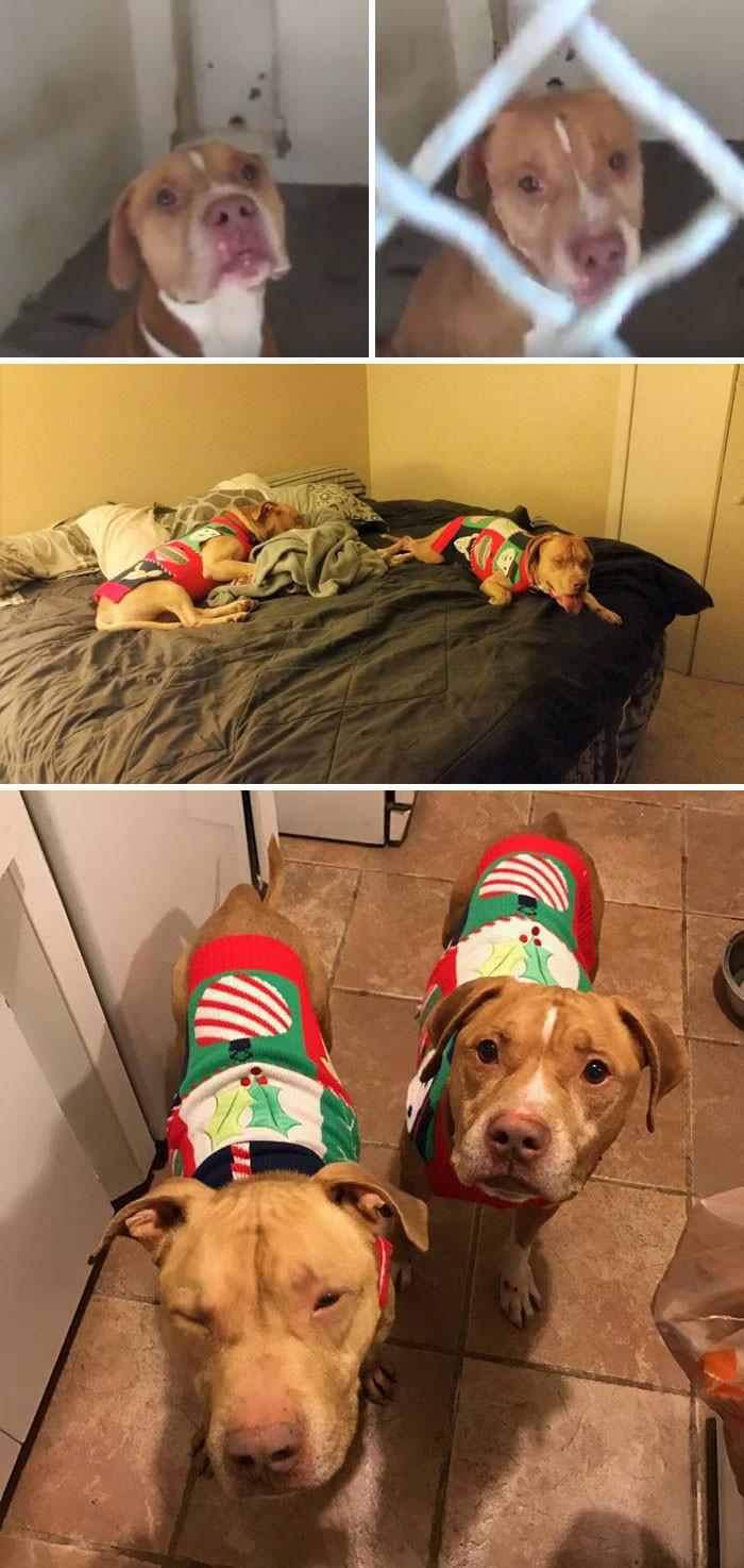 Два брата-пса прожили раздельно в приюте 118 дней, но все-таки нашли общий дом животные, спасение, счастливый конец