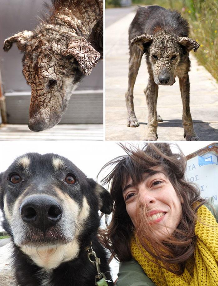Пес, покрытый коростой, боялся человеческого прикосновения. Теперь он постоянно требует, чтобы ему чесали пузо животные, спасение, счастливый конец