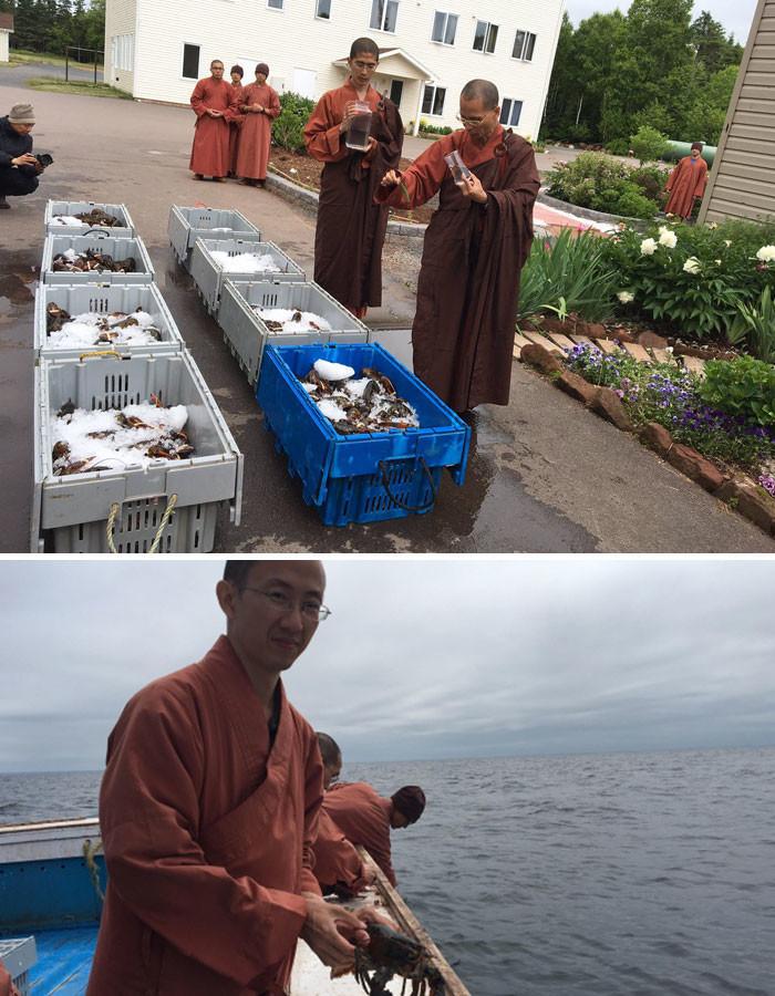 Буддистские монахи купили 250 килограммов лобстеров, чтобы отпустить их обратно в океан животные, спасение, счастливый конец