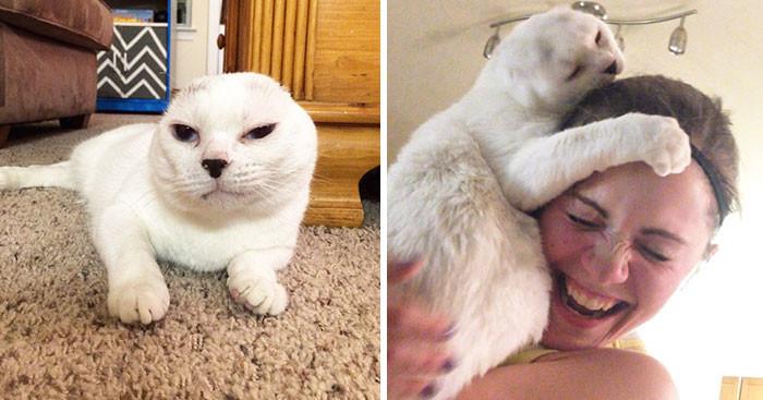 Женщина взяла в дом старого безухого кота, которого никто не хотел брать. Позже он помог ей справиться с тревожностью животные, спасение, счастливый конец