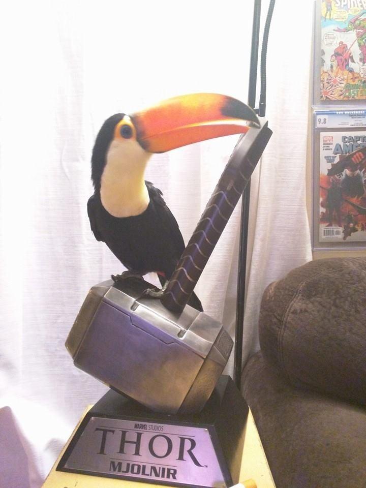 Конечно, она веселая и очень своеобразная птица, и любит принимать участие в других хобби своих родителей… животные, милота, птицы, тукан