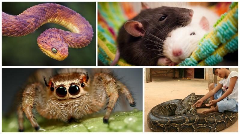 Фотографии,после которых вы обязательно полюбите их! животные, змеи, пауки