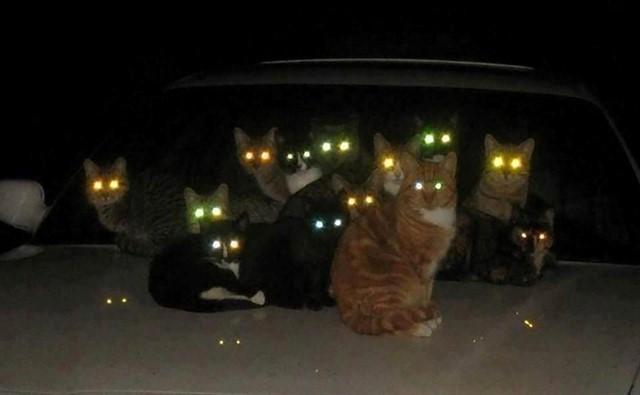 19. Глаза в темноте животные, коты, факты