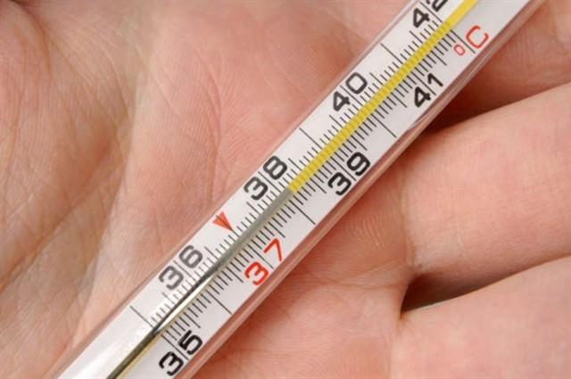 22. Нормальная температура тела кошки - 102 градуса по Фаренгейту (38 по Цельсию) животные, коты, факты