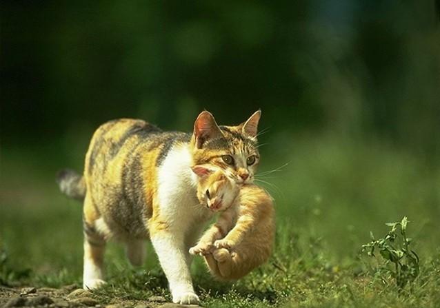 29. Рефлекс загривка животные, коты, факты