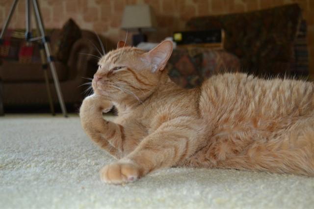 3. Мозг кошки животные, коты, факты