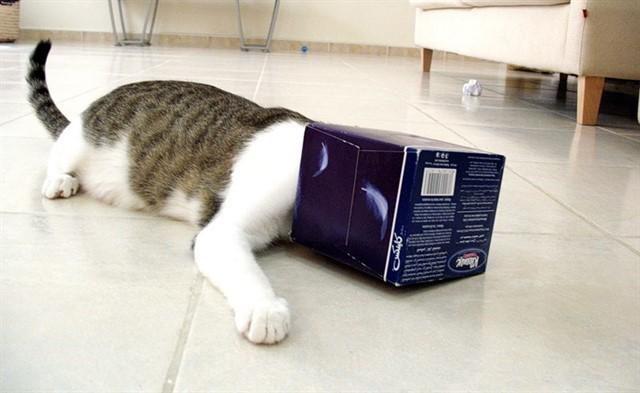 13. Коты прячутся, когда больны животные, коты, факты