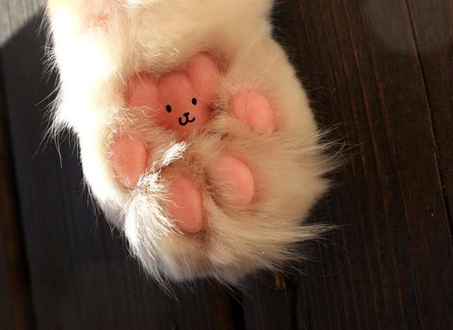 10. Потеют ли кошки? животные, коты, факты