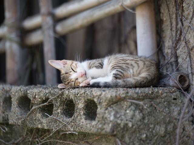 5. Кошки - самые ленивые млекопитающие. Они спят 16 часов в день. То есть около 70 % своей жизни. животные, коты, факты