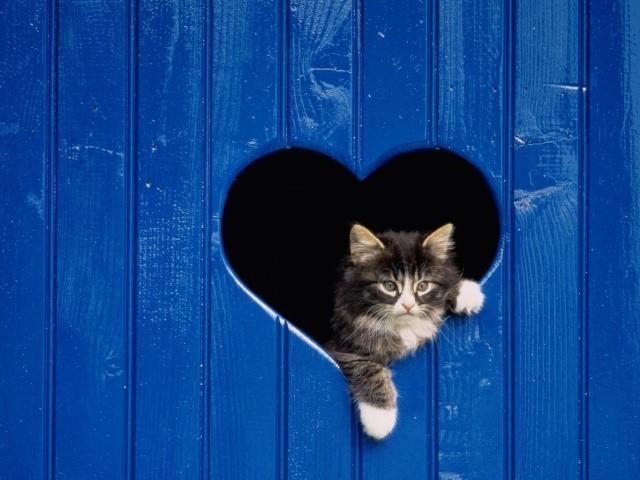 P.S. Берегите и любите кошек! :) животные, коты, факты