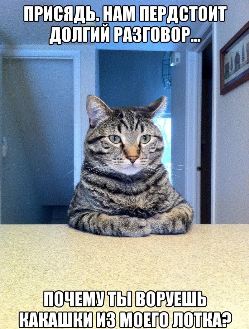 25. Чем больше вы говорите с кошками, тем больше они говорят с вами животные, коты, факты