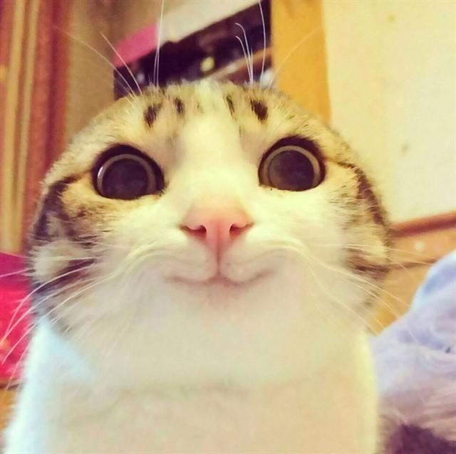 26. Если зрачки расширены, несмотря на яркое освещение, кошка чем-то очень заинтересована или в игривом настроении животные, коты, факты