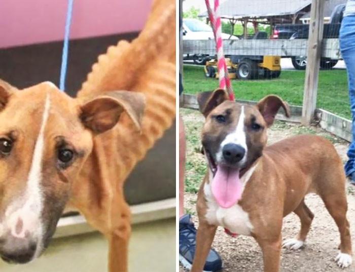 Сэди - до и после собаки, спасение, счастливый конец