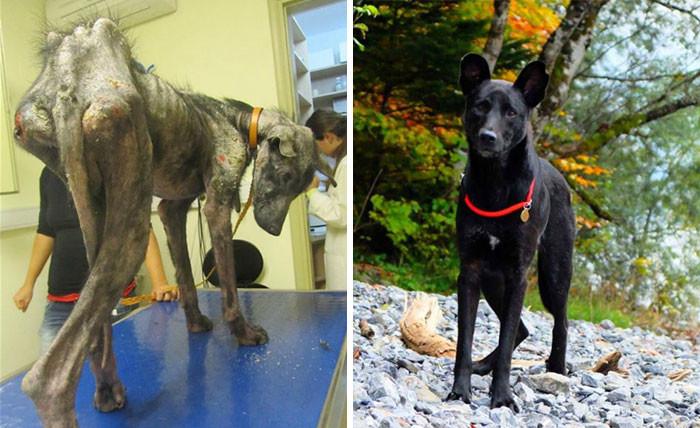 Спасенный пес Билли до встречи с новыми хозяевами - и в своем доме собаки, спасение, счастливый конец