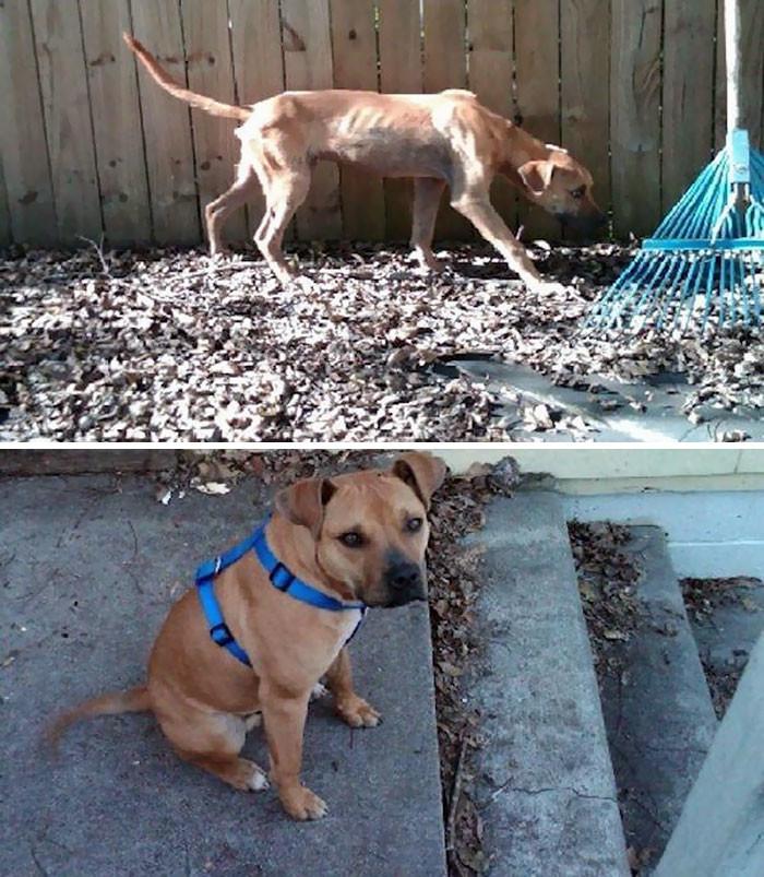 Еще один пес, спасенный от голода собаки, спасение, счастливый конец