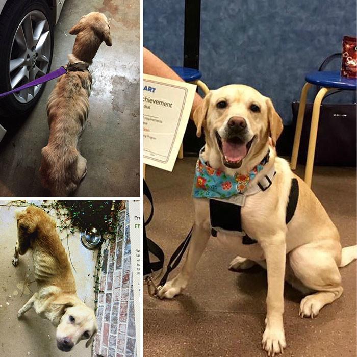 Трудно поверить, что Мэгги всего два месяца назад голодала на улице! собаки, спасение, счастливый конец