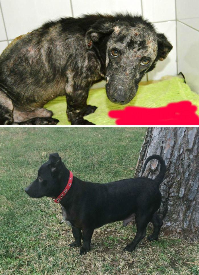 Этого пса спасли с цыганского стойбища в Португалии. Спаситель взял его себе - и из него вышел отличный домашний любимец! собаки, спасение, счастливый конец