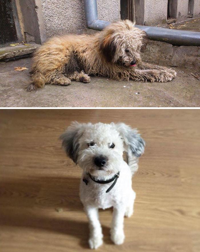 От июля до декабря: спустя полгода уже невозможно поверить, что это одна и та же собака! собаки, спасение, счастливый конец
