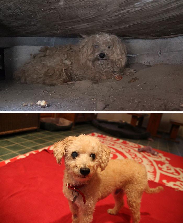 Хозяин Вуди умер, и пес очутился на улице. К счастью, новые хозяева вновь вернули его к жизни собаки, спасение, счастливый конец