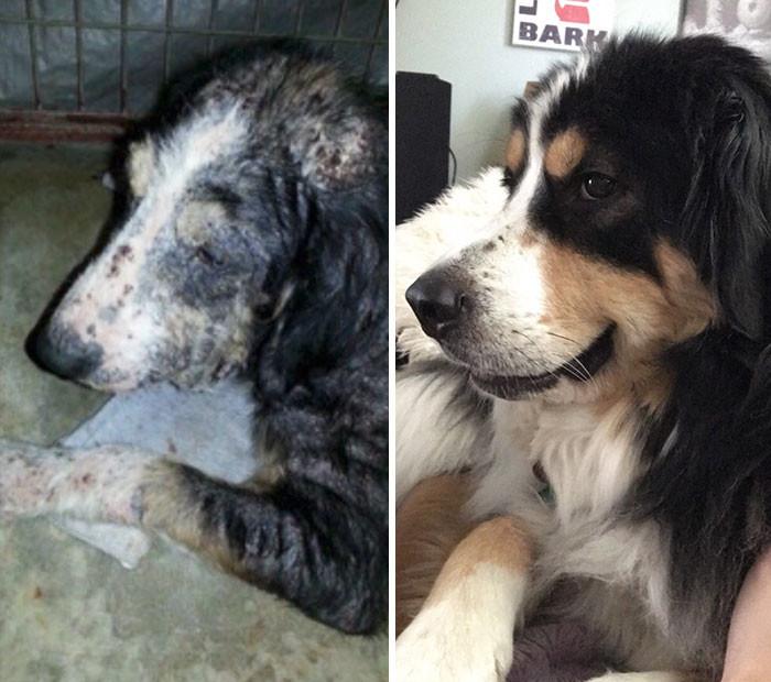 Для таких перемен нужно немного времени - и много любви собаки, спасение, счастливый конец