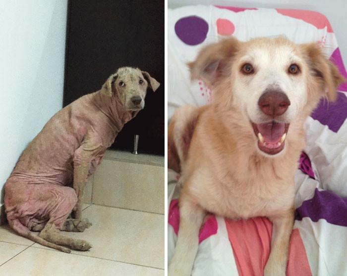 За несколько месяцев Хейзел изменилась до неузнаваемости! собаки, спасение, счастливый конец
