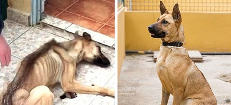 Собаки, которых спасла любовь собаки, спасение, счастливый конец