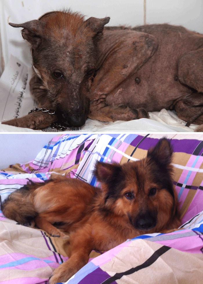Эйден страдал кожной инфекцией и всего боялся. Но сейчас он полностью пришел в норму! собаки, спасение, счастливый конец