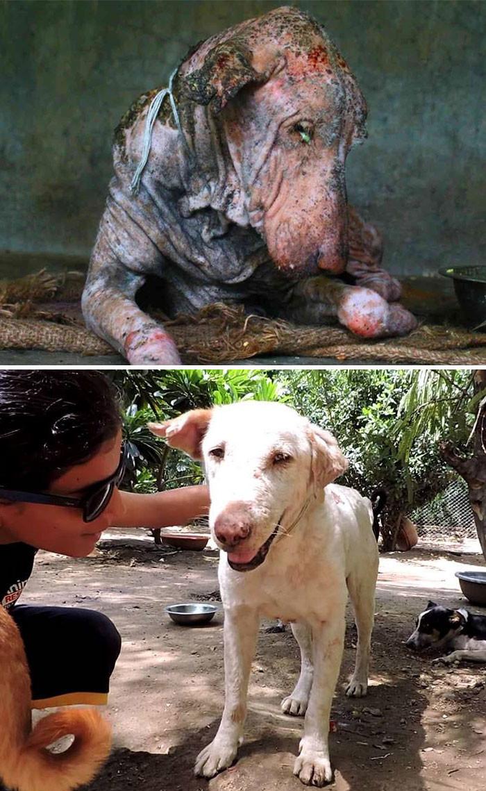 Умирающий уличный пес страдал от чесотки и уже успел забыть, каково это - общаться с человеком. Но теперь он все вспомнил! собаки, спасение, счастливый конец