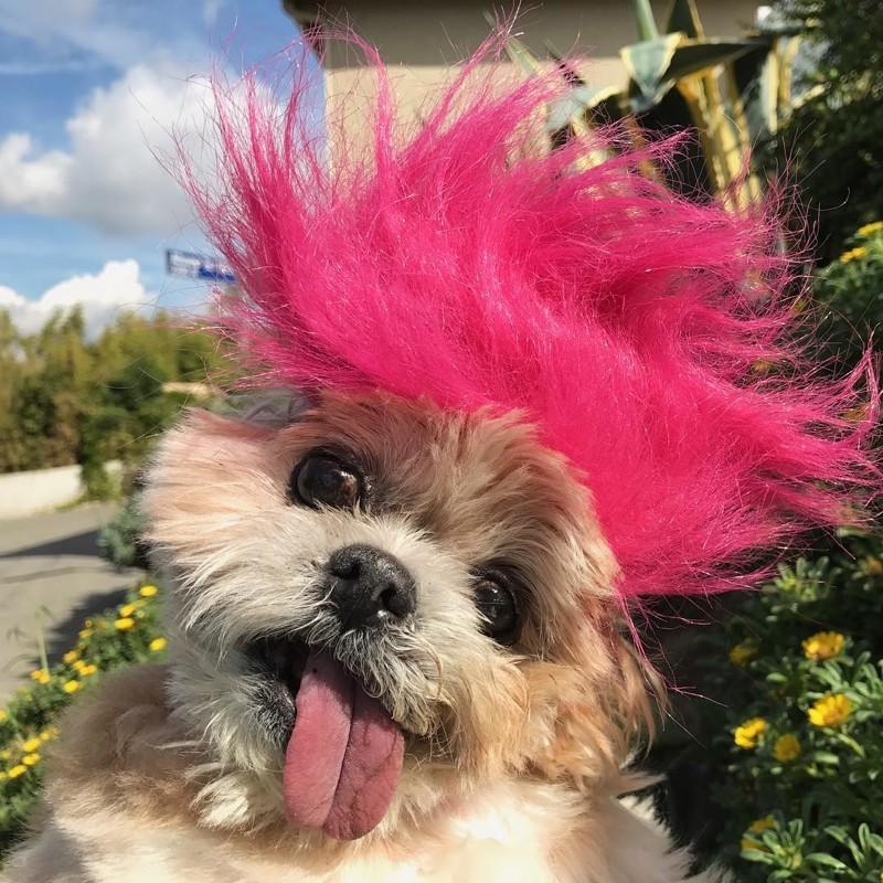 Как брошенная собака обрела новый дом и стала звездой Инстаграма животные, милота, собака