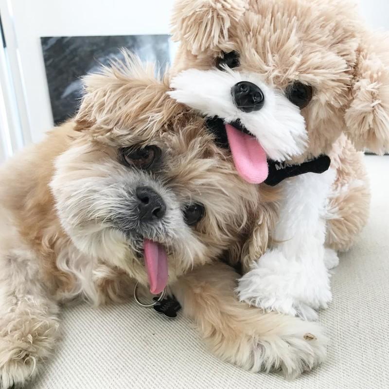 Марни со своей игрушечной копией животные, милота, собака