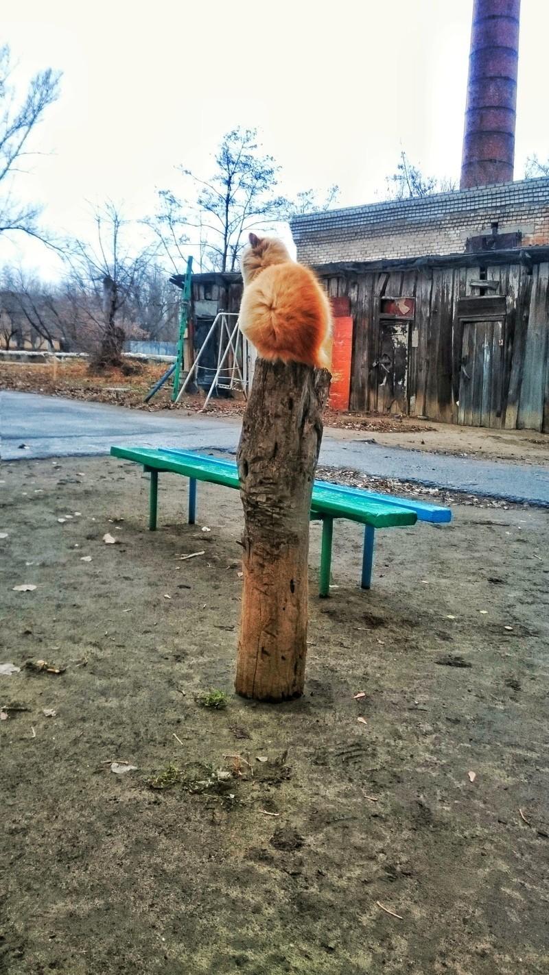 Очень колоритные уличные коты коты, окраины, улица, эстетика