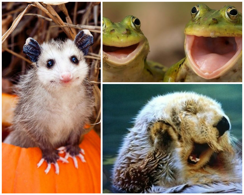 Поделись улыбкою своей животные, красиво, смешно, улыбки