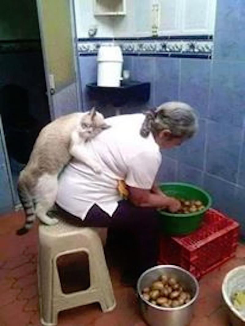 Коты и их люди коты, кошки, юмор